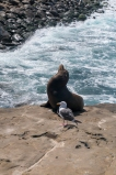 Sea Lion and his buddy